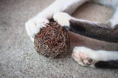 Pata del gato con las garras hacia fuera Imagen de archivo libre de regalías