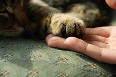 Pata del gato en la mano humana imagen de archivo
