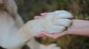 Pata del perro en la mano imagenes de archivo