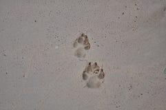 A pata do cão marca na praia fotografia de stock