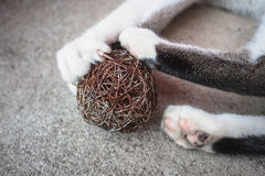Pata do gato com garras para fora Imagem de Stock Royalty Free
