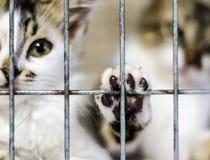 A pata do gato na gaiola e os gatinhos no borrão fotos de stock royalty free