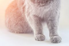 Pata gris del ` s del gato en el panel imágenes de archivo libres de regalías
