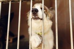 Pata ponting y nariz del perro positivo lindo en la jaula del refugio, feliz Fotografía de archivo libre de regalías