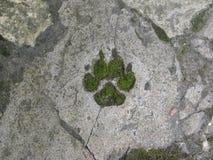 Pata verde do lobo, conceito da ecologia Fotografia de Stock