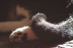 Pata y cola del ` s del gato Fotos de archivo