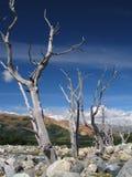 Patagonië Royalty-vrije Stock Foto's