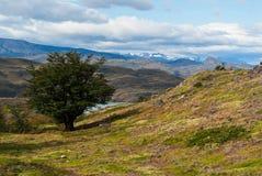 Patagonia #19 Fotografia Stock Libera da Diritti