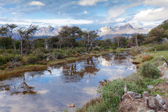 Patagonia Argentina do parque nacional de Terra do Fogo Fotos de Stock
