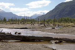 Patagonia, Chile. Patagonia landscape. Ibanez river with dead trees and Andes in the background, Chile. The trees was destroyed by the eruption of the Hudson Royalty Free Stock Images