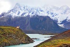 Patagonia di Neverland Donna che guarda le montagne innevate Fotografie Stock Libere da Diritti