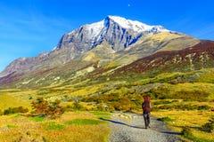patagonia för park för paine för norte för nido för ndor för central chile de del montering för c maximal nationell synliga surto Arkivfoto