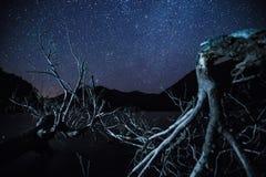 Patagonia för stjärnklar natt Royaltyfria Foton
