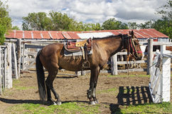Patagonia Horse Stock Image