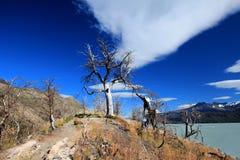 Patagonia, parco nazionale Torres del Paine fotografie stock libere da diritti