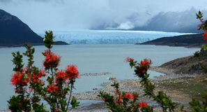 Patagonia Perito Moreno Clacier 1. Glaciar Perito Moreno in Southern Patagonia, Argentina Stock Image