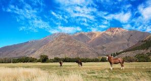 Patagonia. South Argentina landscape, patagonia horses Royalty Free Stock Photos