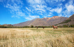 Patagonia. South Argentina landscape, patagonia horses Royalty Free Stock Photography