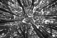 Patagonia trees. Background Stock Photos
