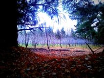 Patagoniaargentinien-Natur Kirschbäume Stockbilder