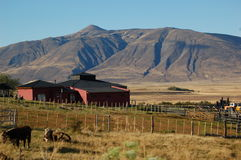 Patagonian Boerderij royalty-vrije stock foto's