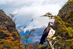 Patagonian classic: bird, tree, hill. Torres del Paine Stock Photos