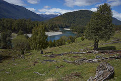 Patagonian floder Arkivbild