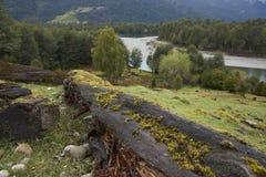Patagonian floder Arkivfoto