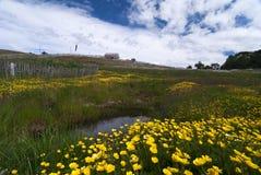Patagonian landscape Stock Images