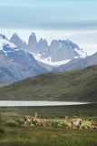 Patagonian landscape. Torres del Paine peaks Royalty Free Stock Photos