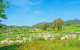 The Patara ruins. The fields of Patara archaeological site are filled with ruined stones of former city, Turkey Royalty Free Stock Photography