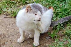 Patas brancas do gato seu fim da orelha acima foto de stock