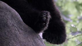 Patas de Fuzzy Panda de um urso do sono filme