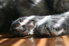 Patas de Kitty Foto de archivo libre de regalías