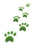 Patas del animal doméstico de la hierba
