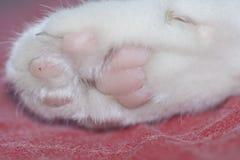 Patas del gato imagen de archivo libre de regalías