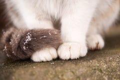 Patas del gato Imágenes de archivo libres de regalías