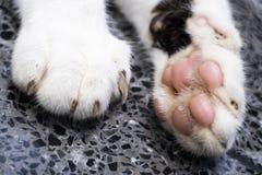 Patas del gato fotos de archivo