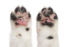 Patas del perro foto de archivo libre de regalías