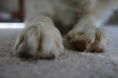 Patas del perro Foto de archivo