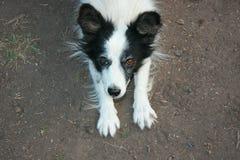 Patas divertidas juguetonas blancos y negros del perro para arriba en la tierra fotografía de archivo
