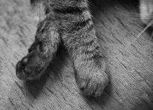 Patas do gato Fotos de Stock
