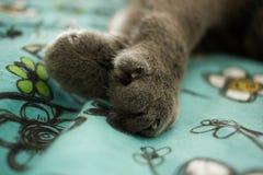 Patas do gato Fotos de Stock Royalty Free