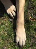 Patas dos cães na grama Imagem de Stock Royalty Free