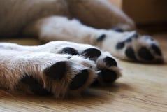 Patas lanudas del perro foto de archivo