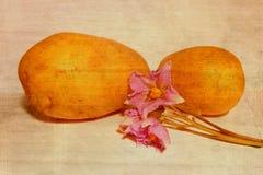 Patata Imágenes de archivo libres de regalías