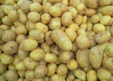 Patata, alimento, verdura, patate, fresche, agricoltura, crudo, bianco, sano, giallo, organico, vegetariana, ingrediente, bro immagine stock libera da diritti