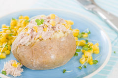 Patata bollita con la buccia Fotografie Stock