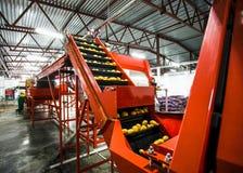 Patata che ordina, fabbrica di imballaggio e di elaborazione fotografie stock libere da diritti