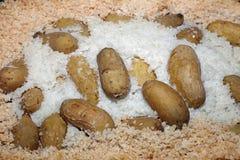 Patata cocida en corteza de la sal Imagenes de archivo